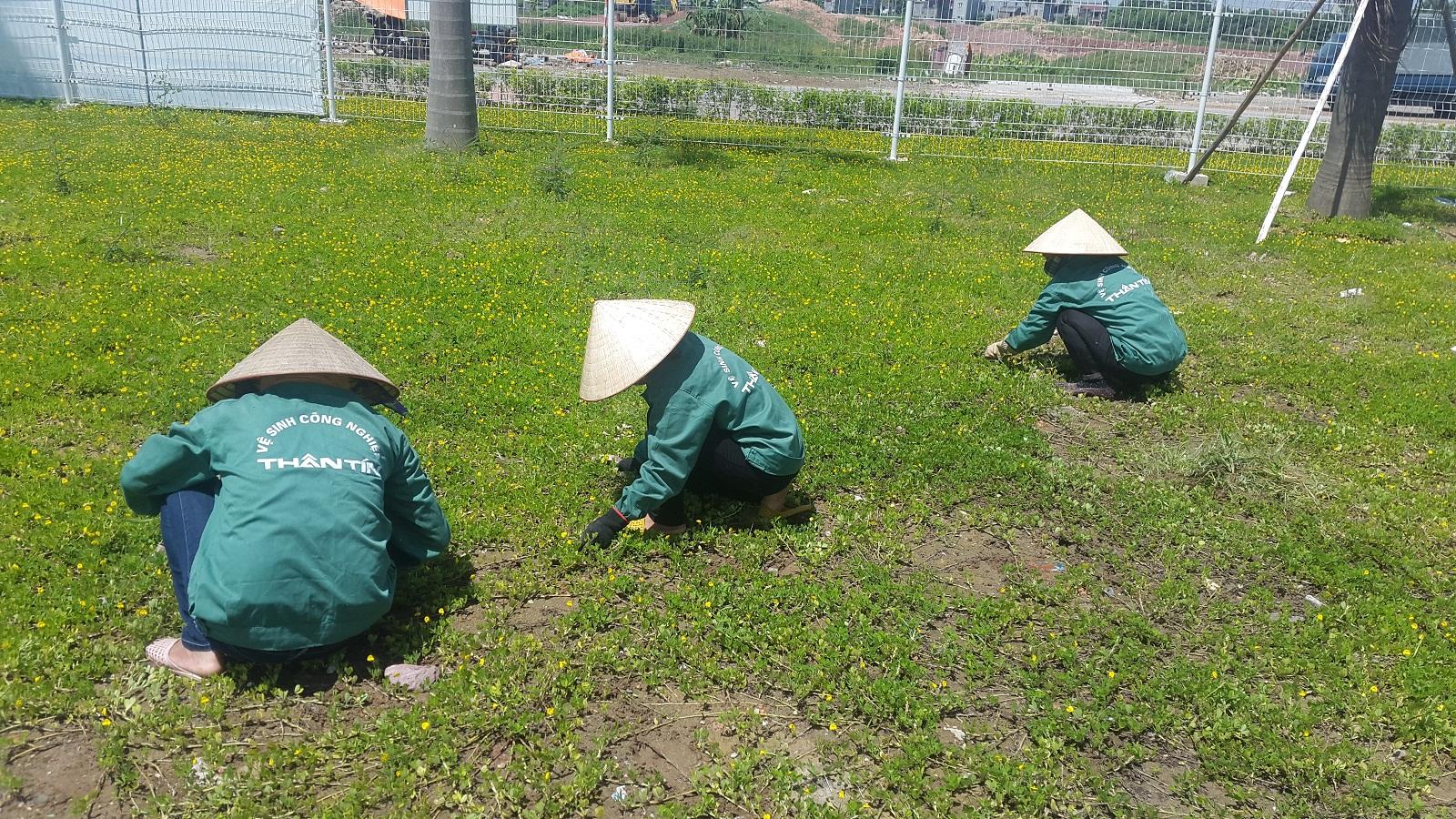Chăm sóc và cắt tỉa cây cỏ, cây cảnh